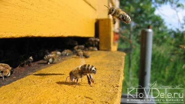 Бизнес план по разведению пчел