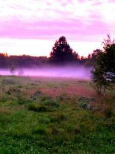 Овцеводство в Беларуси и других странах особенности